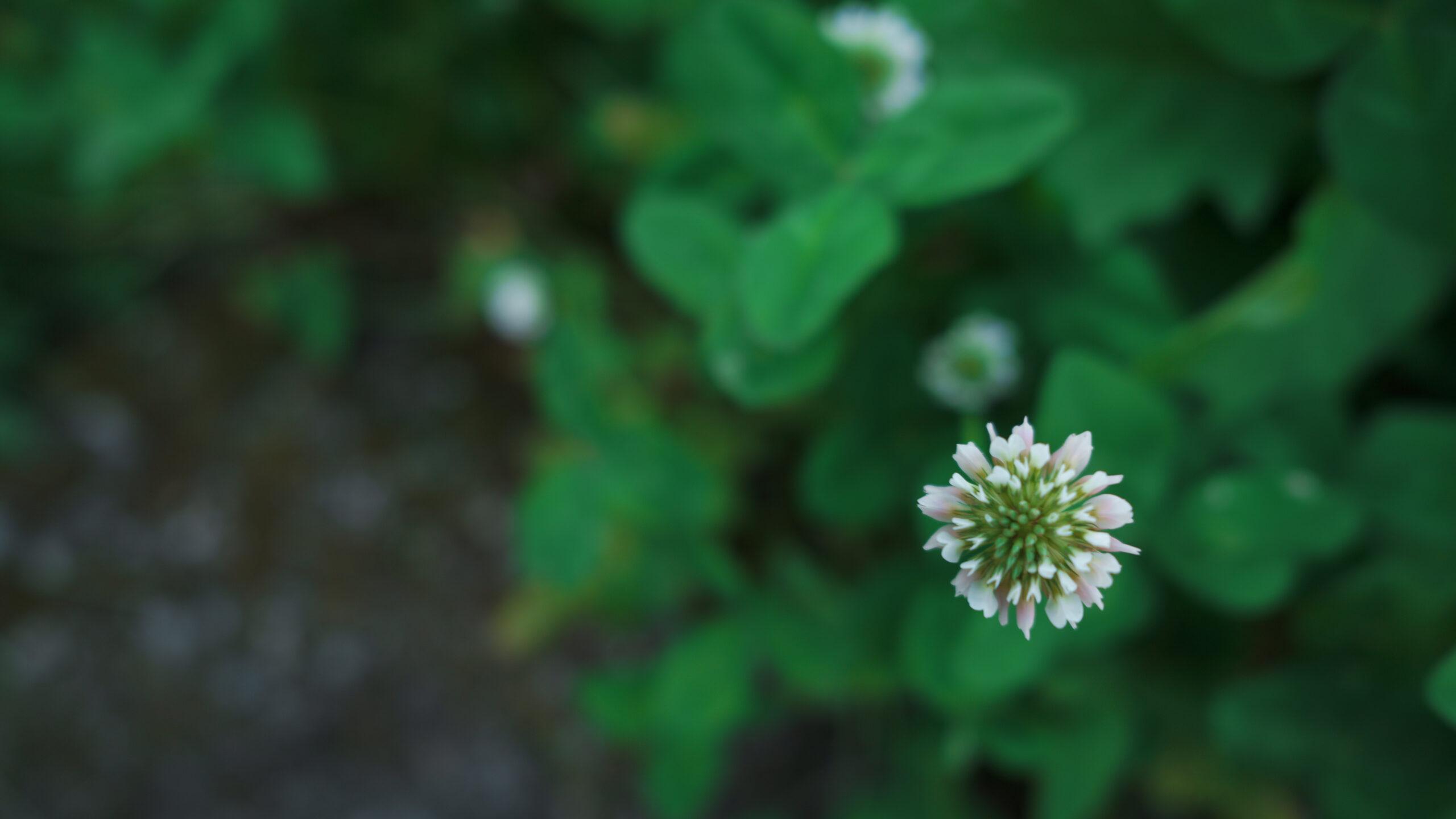 「田んぼの畦道の花」カラーモード「パウダーブルー」Camera : SIGMA fp Lens : Sigma 24mm F3.5 DG DN Contemporary