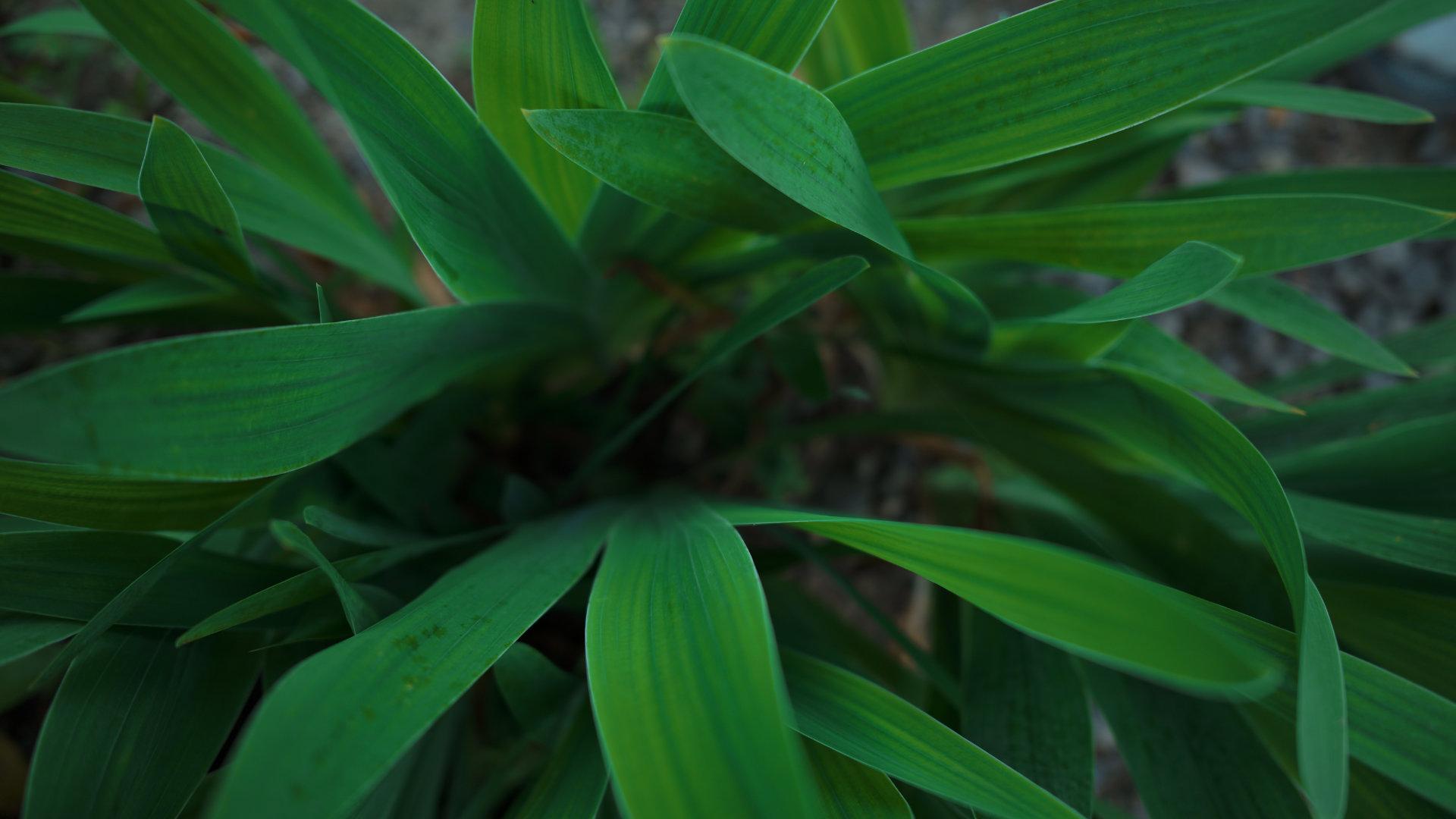 「庭先の緑」カラーモード「パウダーブルー」Camera : SIGMA fp Lens : Sigma 24mm F3.5 DG DN Contemporary